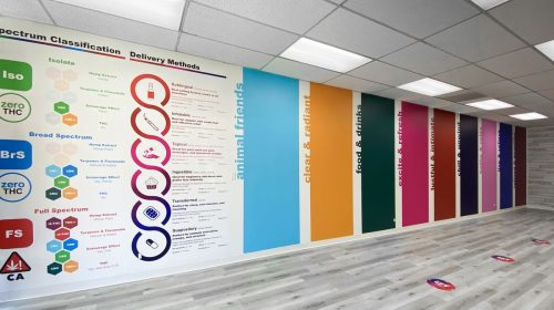 Colorful indoor wall decals