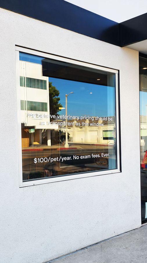 Modern Animal window lettering
