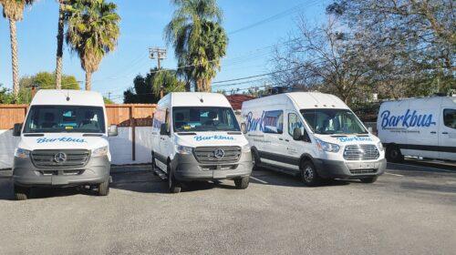 Barkbus company vehicle wraps