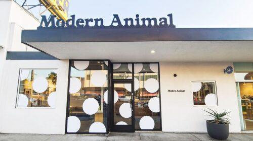 Modern animal window decals