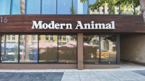 modern animal reverse channel letters
